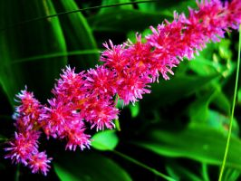 Pink Baby Flowers by melissrrr