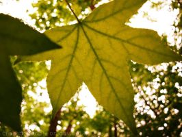 New Camera Shots- Dreamy Leaf by hourglass-paperboats