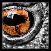 June 2005 Frogs: Daemon's Eye by macrophoto