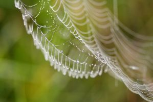 Spider's pearls by Samantha-meglioli