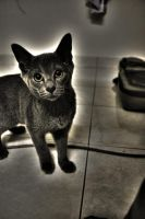 Cat Chartreux by oNezzzART