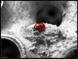 sweet cute ladybug by nostrom