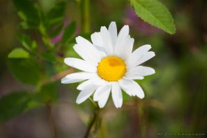 The Beauty of Flowers 1 by imonline