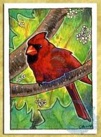 ACEO-ATC: Cardinal by crocodiledreams
