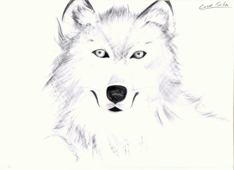 White Wolf by RaSeKc