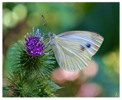 Butterfly for Brian by jankolas