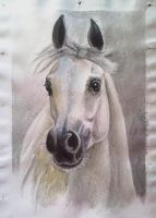 Horse watercolor by Twarda8