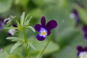 Stock: Flower by Think-Outside-Of-Box