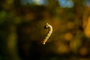 A Worm by Domichal