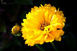 Close and Yellow... by soundsk