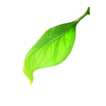 One leaf. by deathdetonation