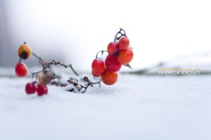 Red Berries of First Snow III by confucius-zero