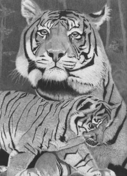 Tiger and Cub by drawman61
