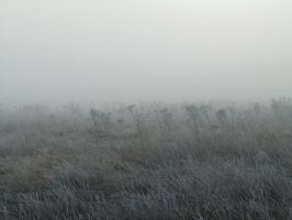 In the Mist 10 by fuguestock