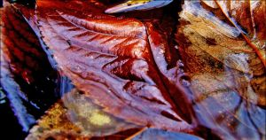 Leaves And Water by tamaskatai