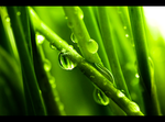 Green Raindrops I by lebensmelodie
