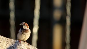Sparrow 0401 by fractalfiend