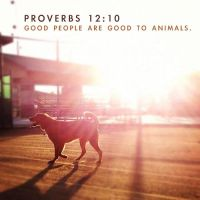 Proverbs 12:10 by Treybacca