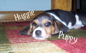 Huggle Puppy by Born2LiveLife