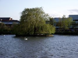 Swan Island by Vicky100296