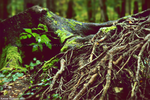 Roots to a new place by ww-photo-gallery