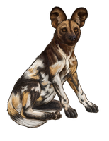 African Wild Dog Doodle by Caitlyn92