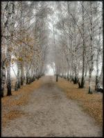 Birch alley II by orientespl