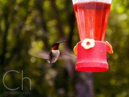Hummingbird 1 by Champineography