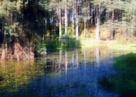 by woodland pool by awjay