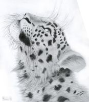 Looking Up by BigCats