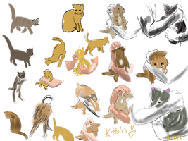 Kitteh Sketches by KyoFishie
