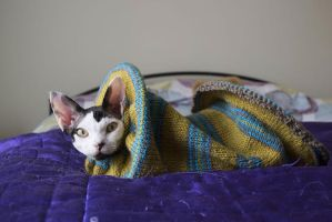 Devon Rex Cat and Knitted Bed by bodypillow