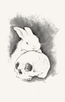 skulls 'n bunnies by rabbit-season