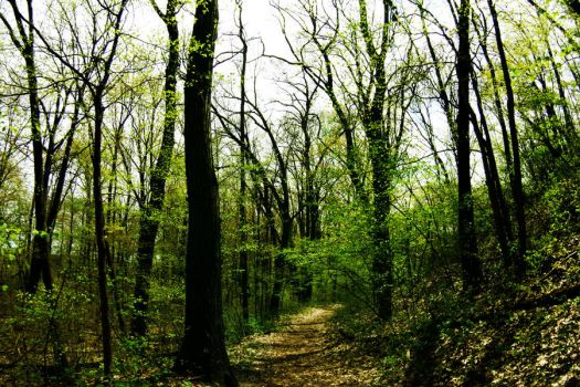 trees at grand mere 2 by thisbodyholdingme6