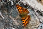 Comma on the Rocks by duncan-blues