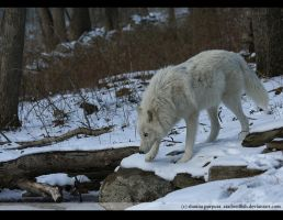 Atka the Curious by causticxace