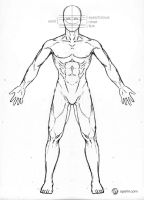 Male Anatomy Drawing Model - Front by Gourmandhast