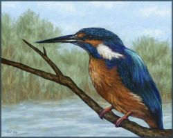 Kingfisher by starmist