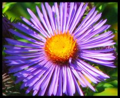 Vivid Purple by picworth1000wrds