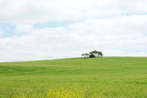 The Meadow by CAmpoo691