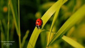 Little Lady Beetle by RHARIZONA