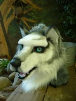 husky wolf close up by LilleahWest