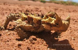 TypicalThornyDevil by TypicalTash