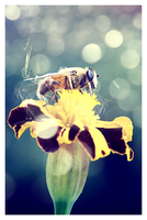 Mr. Bee by kybel