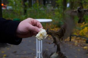 Feeding Birds in Berlin 2010 by CathexisDk