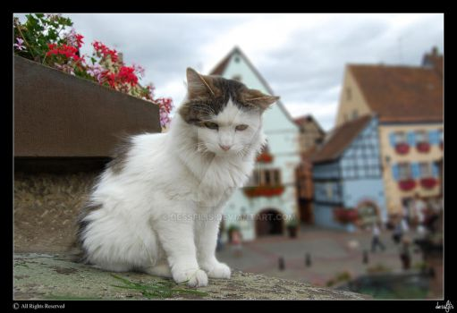 French cat by dessfilis
