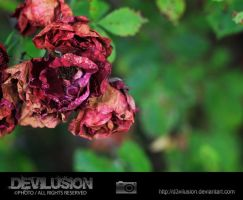 IMG_2796 by D3vilusion