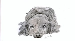 DOG by HUMBBLE