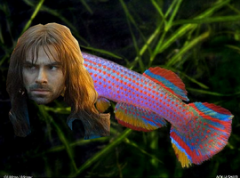 Kili-fish Killifish by Moonfur323