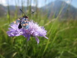 Austrian Moth by OneEyePerspective